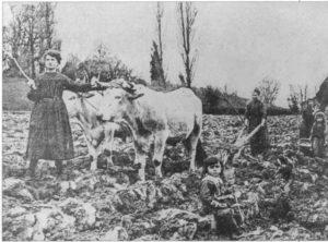 Eauze - Les femmes en charge des travaux des champs