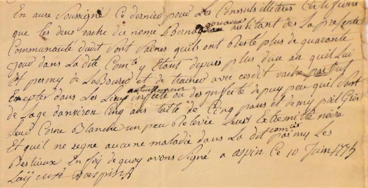épizootie bovine - la lutte - Certificat du curé d'Aspin Aure pour deux vaches saines – ADHP E dépôt 11 – Photo SCV