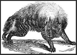 Le mandragot (ou chat d'argent en Bretagne) bête largement partagée dans les contes européens