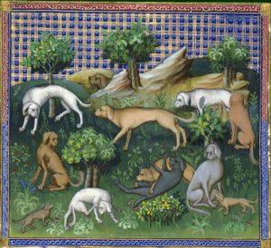 Le livre de chasse, folio 47v - du chien courant et de toute sa nature