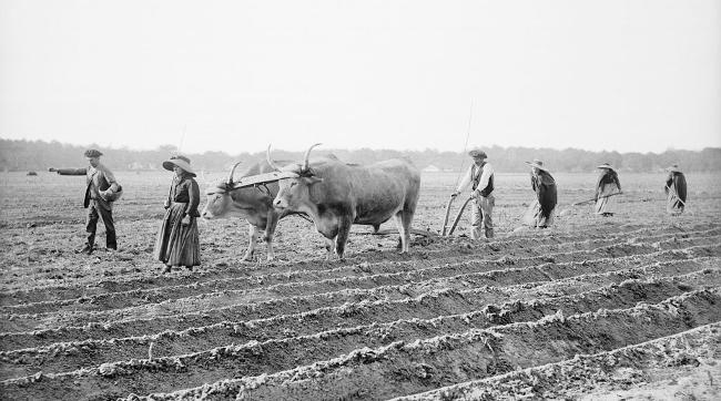 Avant le pinhadar une agriculture de subsistance - Félix Arnaudin - Labours et Semailles 1893