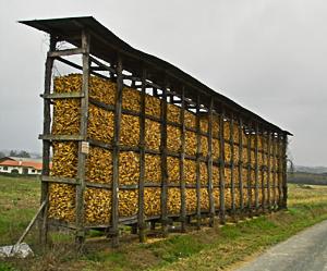 Séchoir à maïs