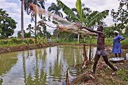 Projet financé par les Nations Unies pour l'Organisation des Paysans de Gascogne (Haïti)