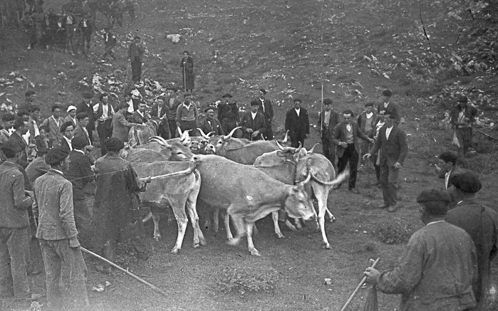 les maires béarnais de la vallée de Barétous remettent à leurs homologues de la vallée de Roncal trois vaches en vertu d'un traité vieux de plus de six siècles