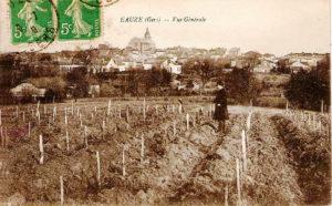 Carte postale d'un vignoble d'Eauze