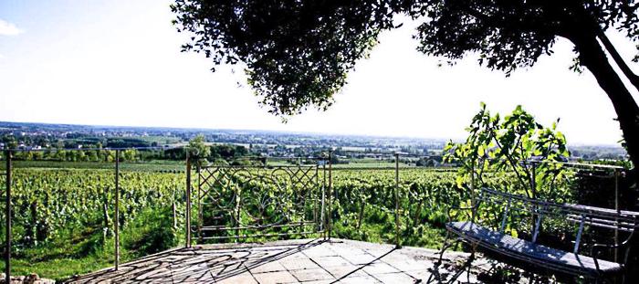 Le vignoble de Malagar