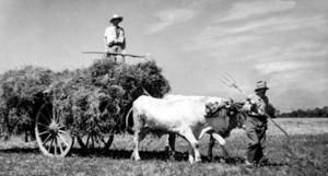 Travaux agricoles sur les terres de la famille de Stefani à Saint-Jory (Haute-Garonne), 1942. © EDITALIE